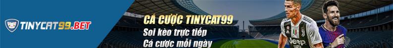 Tinycat99 - Review mới nhất và link truy cập vào nhà cái cá cược